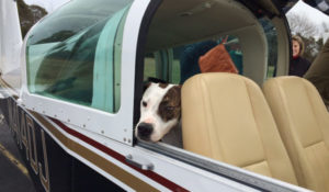doggie passenger sticking his head out of aircraft